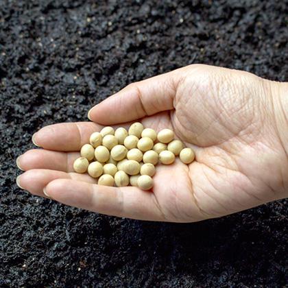 国産地大豆のみ
